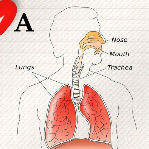 Metoda TMB - cele - poznaj stan swojego zdrowia.